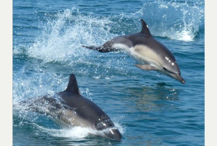 Sail Bed and Breakfast Dolphins Alongside South Devon