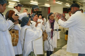 Brixham Fish Market Tour